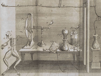 A 1781 Drawing from Galvani's notebook.