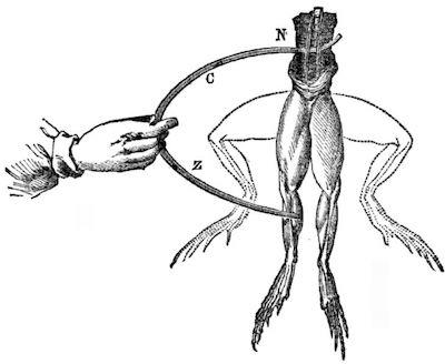 Galvani notebook image of contracting leg
